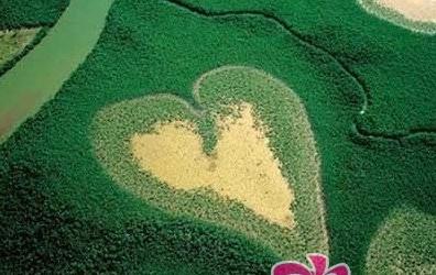 7.新喀里多尼亚岛的心形voh红树林